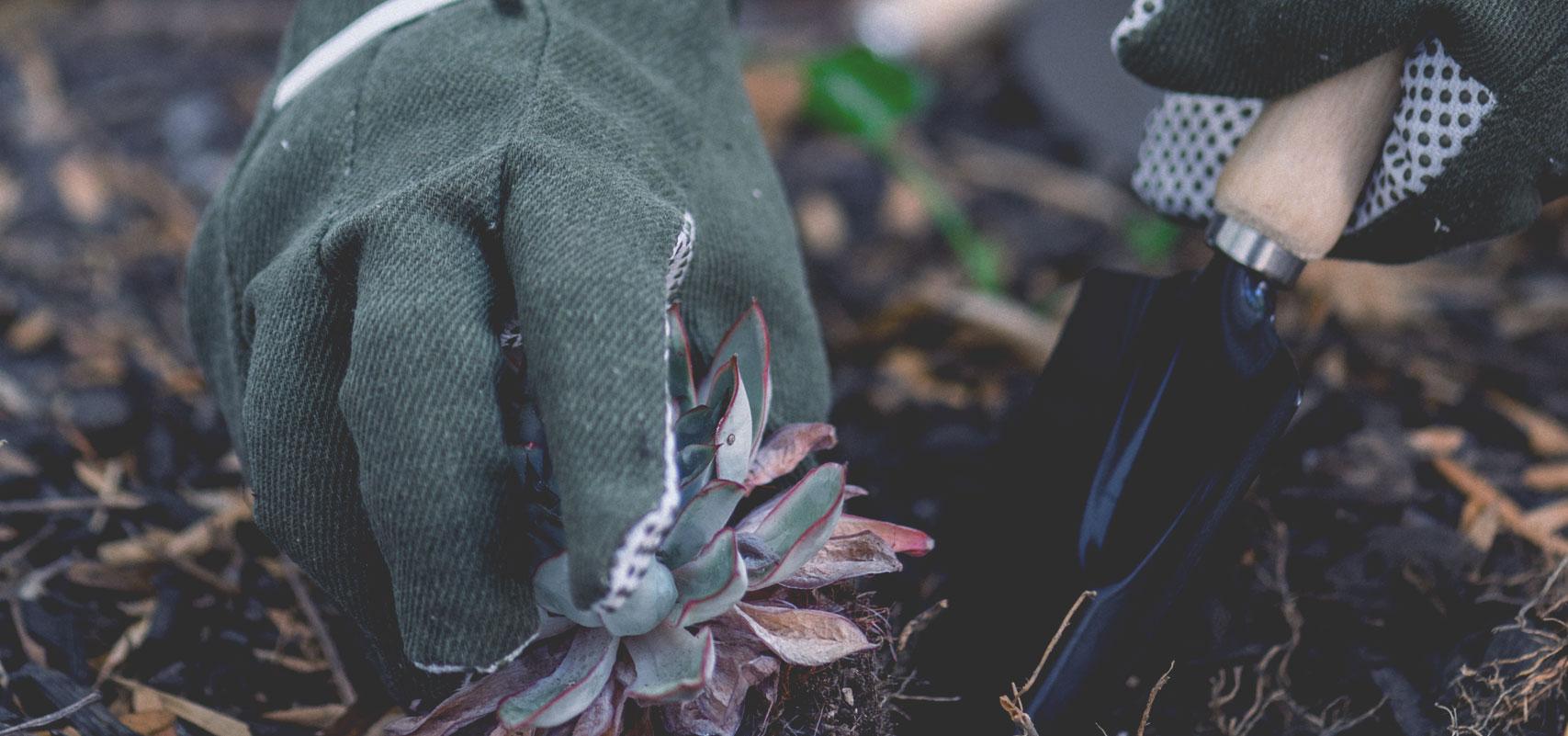 gardener-16