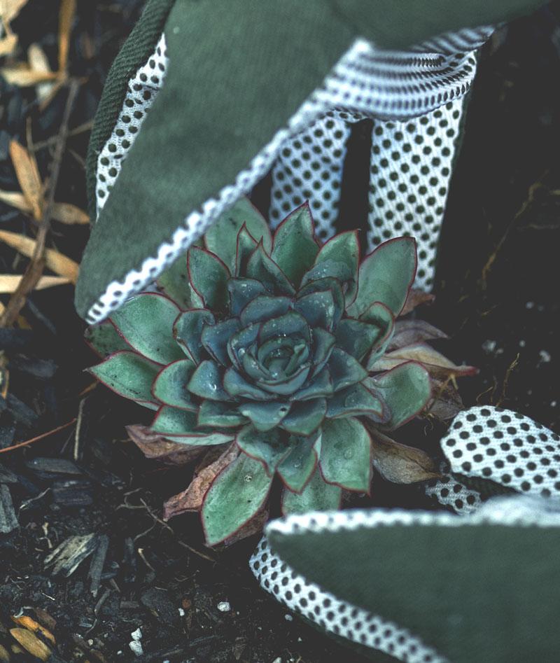 gardener-17